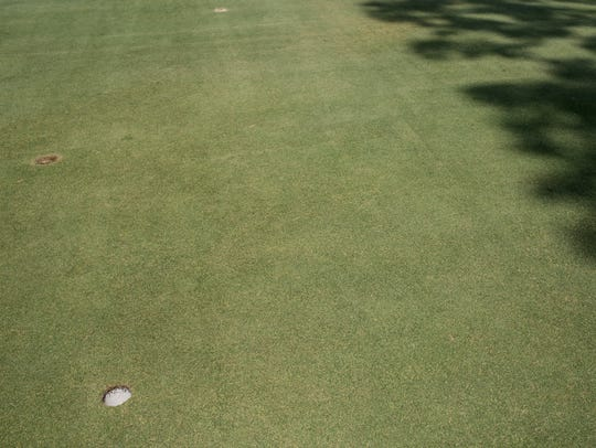 July 25, 2017 - The Overton Park Golf Course greens