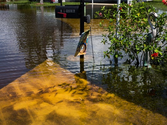 Fish swim in the flooded streets of the Citrus Park