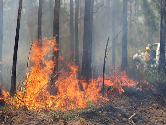 A Florida Forest Service worker, background right, positions a water truck behind a burning stand of brush as the Anclote Branch fire continues to burn Monday, May 8, 2017, in the Starkey Wilderness Preserve in Florida's Pasco County.