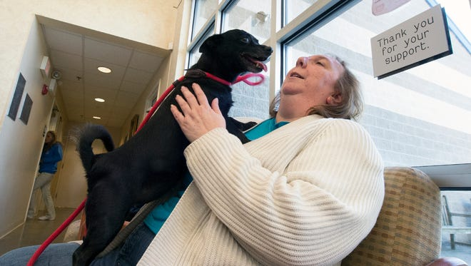 Volunteer Kathy Elias gives Chickadee, a 10-year-old Chihuahua waiting for a home, some attention at the York County SPCA.