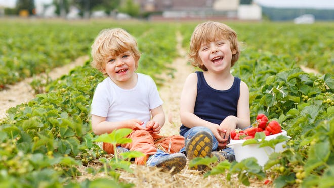 Two boys having fun on a farm in summer
