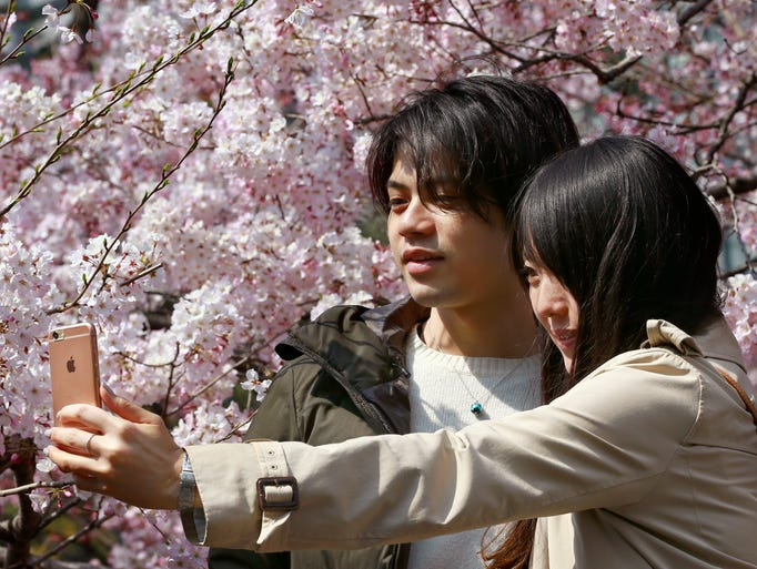A couple takes a selfie under the blooming cherry blossoms