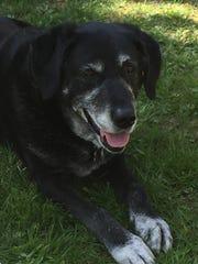 Alexandra Joyce's retired service dog, Deedee.