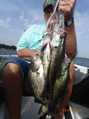 Crappie caught on Lake Fork