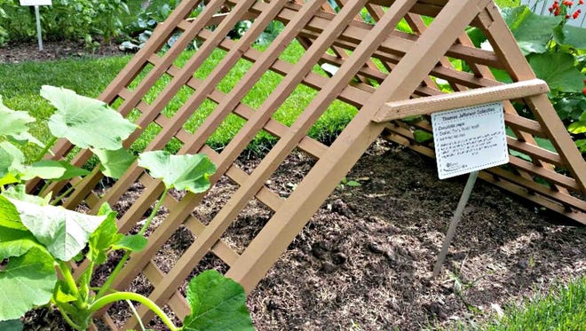 Vine crops like squash can be grown on trellises to increase air flow.