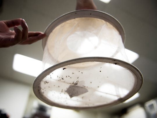 Mosquitoes inside a trapping net at UT's Ellington Plant Sciences Building on Wednesday, July 12, 2017.