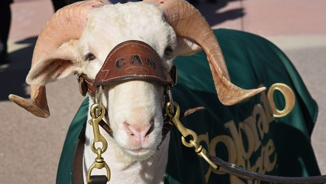 The CSU mascot, CAM the Ram, paid a visit to the Plaza on the university's campus to get his picture taken with students who stopped by during the celebration of Founders Day on Thursday.  Colorado State University celebrated its 146th anniversary.