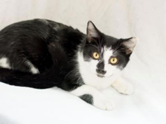 M&M is available for adoption with Fearless Kitty Rescue,