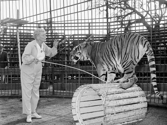 AP Photo/Don Brinn Mabel Stark, Jungleland's only female tiger trainer, works with Goldie, a Bengal tiger from India, at the compound in Thousand Oaks in 1961.