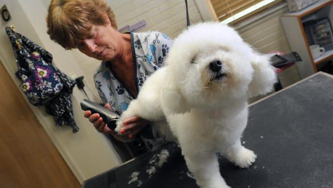 Charlene Nuzum grooms a dog June 26 at Wee Care Pet Service on the west side of Lancaster.
