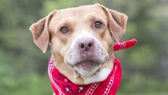 Boomer is just one of more than 200 animals available for adoption at MACC in Nashville.
