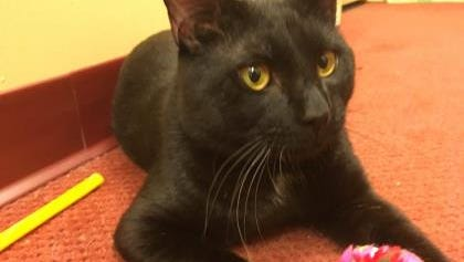 Murphy is sweet, outgoing and smart, and he'll reward his new human companions with love and affection.