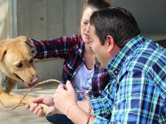 Buddy and his owners were reunited at Greenville County