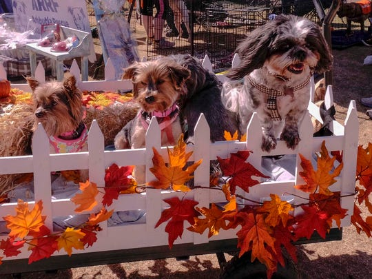 A doggie hayride was a success. Dogs Ginger, Lucy, Stormy, Charlie and Rose all enjoyed the ride.