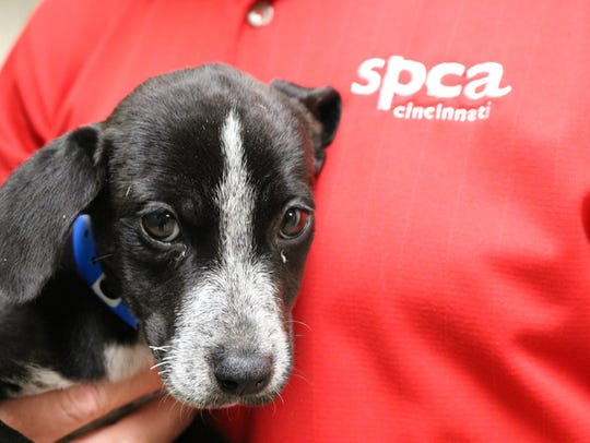 Recent elimination of the Society of Prevention of Cruelty to Animals (SCPA) Cincinnati vet staff has some rescue workers concerned.