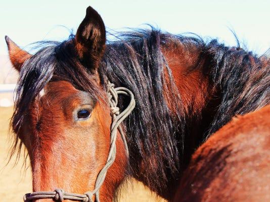 Cece the mare