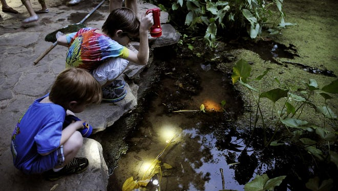 """Young insect investigators use flashlights to find insects and other pond creatures during an """"Insects of the Night"""" event at Warner Park."""