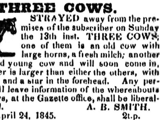 ELM 3 cows.jpg