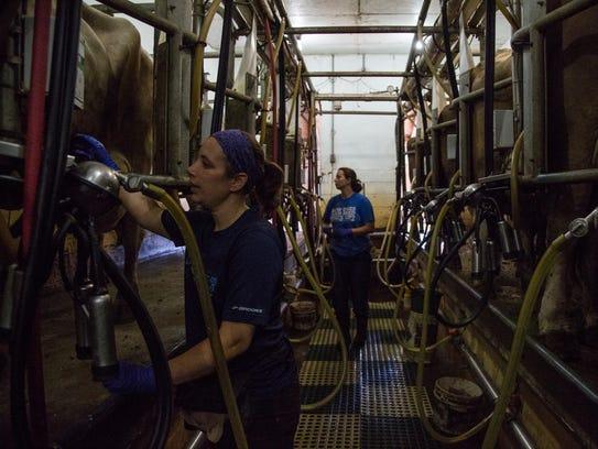 Sarah Gilbert and Carina Wahlert milk cows at Gibralter