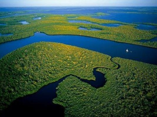 Everglades2.JPG