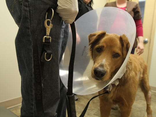 Robert Reid, gets to take Wiley, his golden retriever, home from the animal hospital Friday, almost a week after the fire at Add-En-On Kennels.
