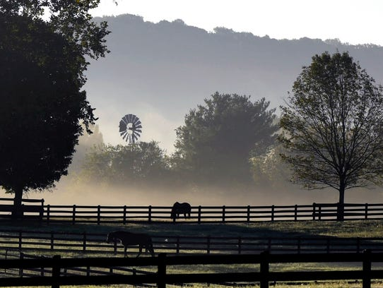 Morning fog covers a farm on Moran Road in Grassland.
