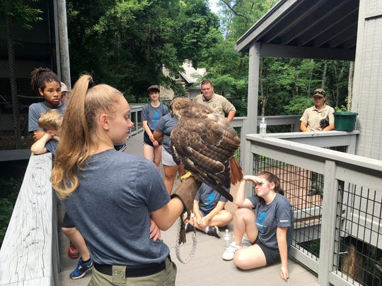 Mackenzie Maness, an intern at Radnor Lake State Park, shows the park's red tailed hawk to a group of junior rangers earlier this summer.