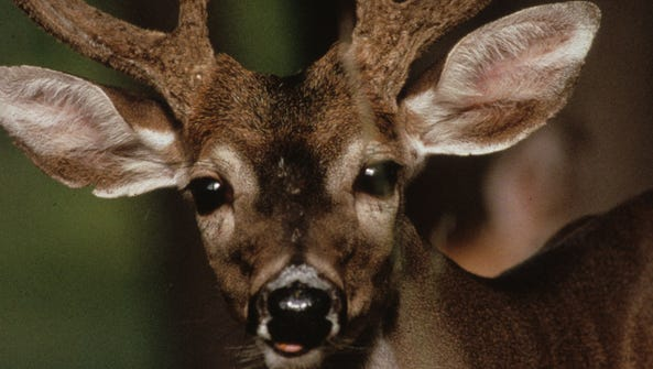 The deer harvest increased across the state and Western