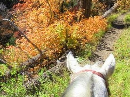 Riding in the Sacramento Mountains, bursts of fall colors are everywhere.