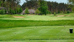 Timber Trace No. 3