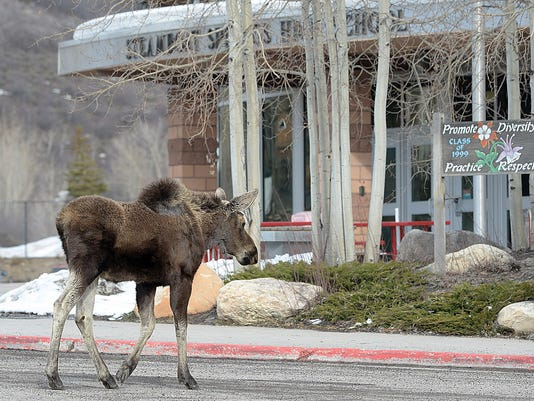 AP Moose Crossing