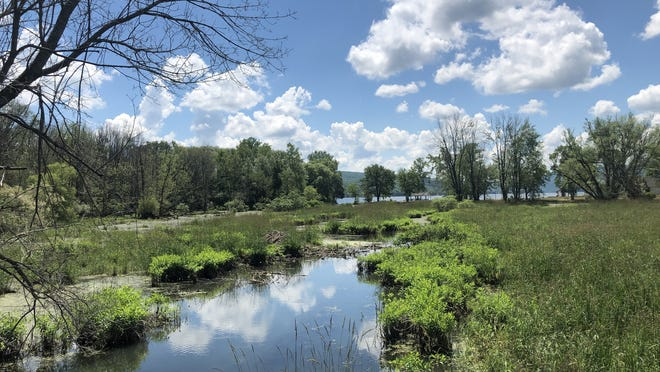 A view of the lagoon and Honeoye Lake from the boardwalk on the Sandy Bottom Park Nature Trail.