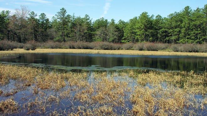 A U.S. Environmental Protection Agency grant helped the state Pinelands Commission undertake a long-sought study of intermittent ponds in the Pine Barrens, such as Skeleton Pond in Brendan T. Byrne State Forest, named for the governor. photo by Kim Laidig/Pinelands Commission OLYMPUS DIGITAL CAMERA