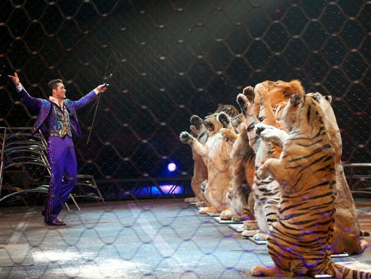 Big cats in circus