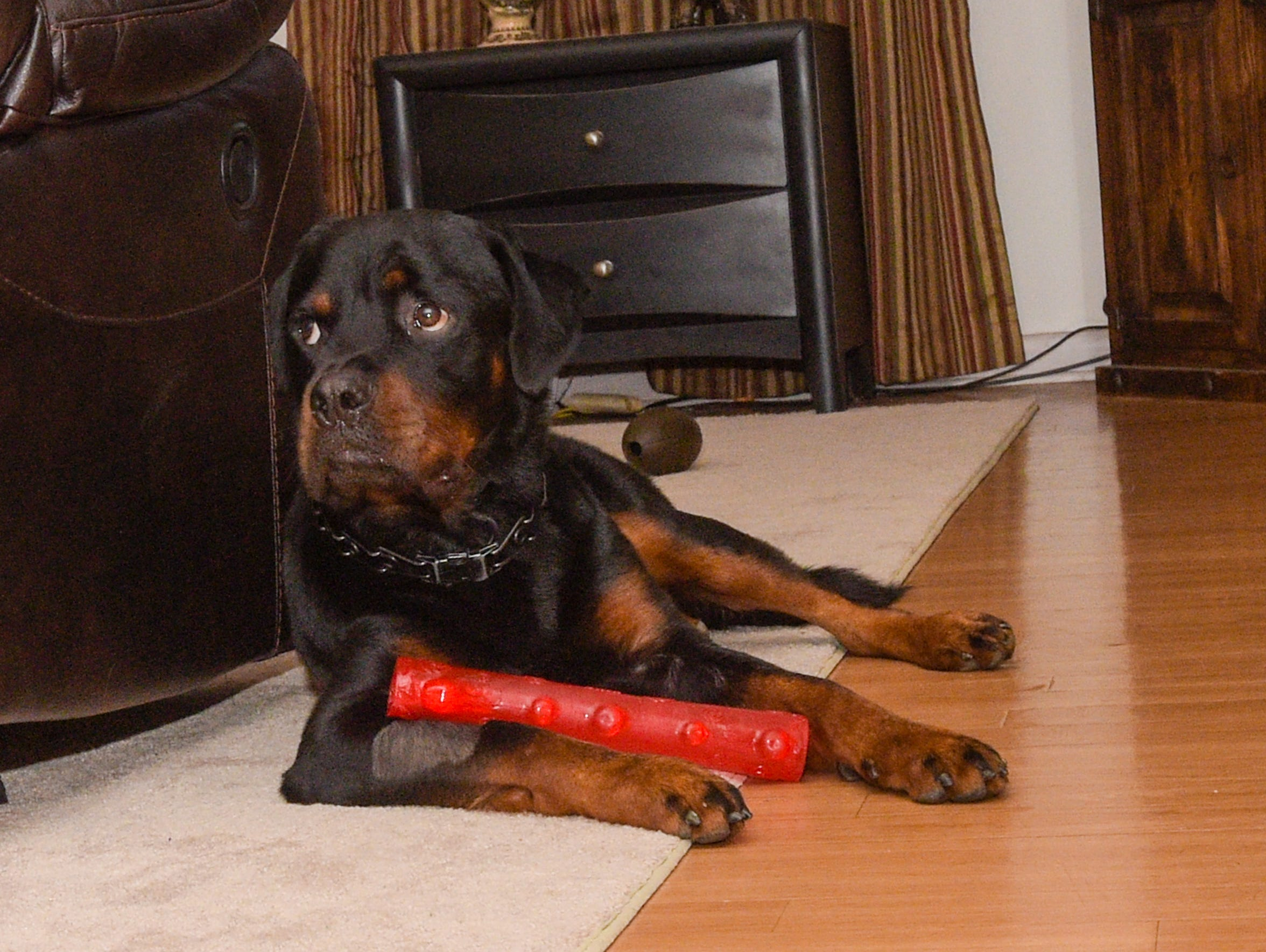 """Beaux's owner, Wren Thomas, calls the dog his """"guardian"""
