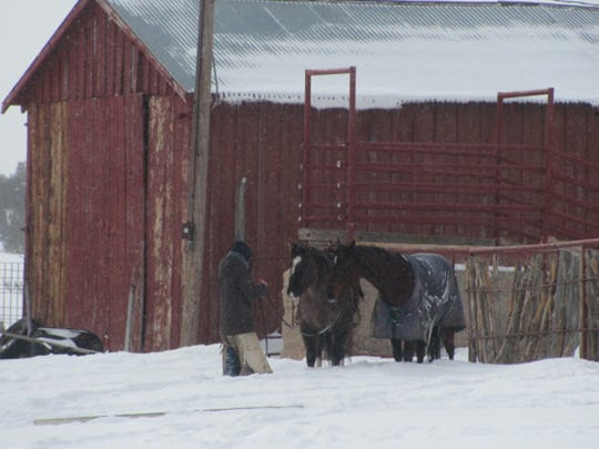 In times of blizzards, a solid broke horse that will pull whatever you tie a rope onto is a must.