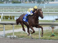 2018 Haskell: Can King Zachary challenge Triple Crown stars?