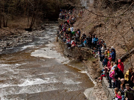 Hundreds of people gathered to watch the beginning of the duck race along the Cascadilla Gorge Trail.