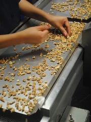 Pecans are double-checked after shelling.