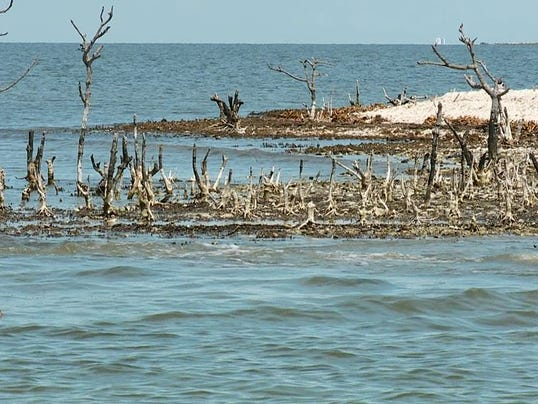 BP spill effects