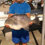 Local angler Robby Louhier with a nice triggerfish he caught while on a charter with Captain Eddie Lively on the charter boat Lively One II.