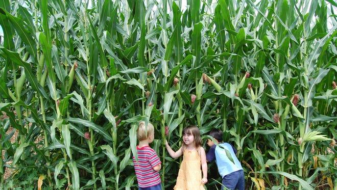 Kids at Eliada's annual corn maze.