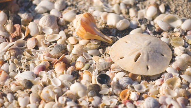 National Seashell Day is a celebration of the gifts from the sea that make our area so special.