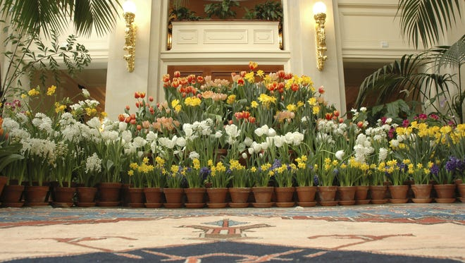 George Eastman was fond of Holland and had thousands of tulips imported here every year. This display re-creates a 1910 display of flowers from Holland at his mansion at 900 East Ave.