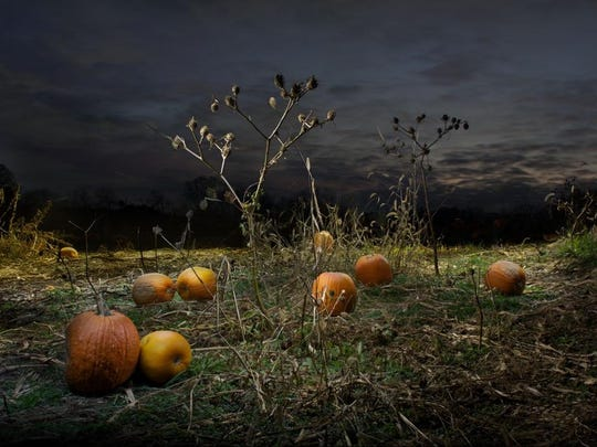 Jane Koester's 'The Pumpkin Patch' is one of the images