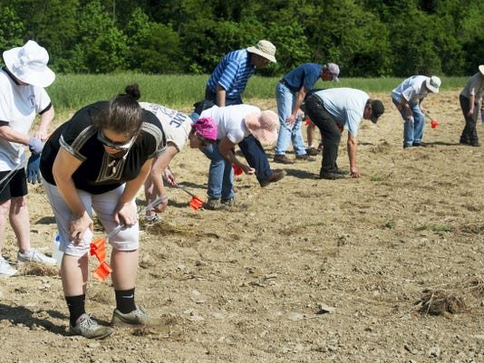 Nancy Godfrey, front, of York Township, begins with a row of other volunteers making a systematic walk across the latest dig site in search of Camp Security on Monday. Today and Wednesday the volunteers will use metal detectors, which last August helped volunteers to find two coins — a British half-penny and a Spanish coin — as well as a musket ball and buttons.