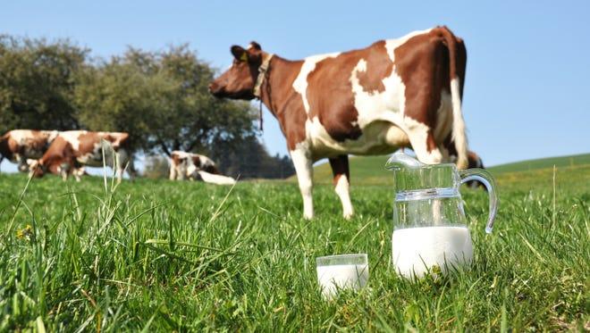 Milk comparison