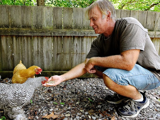Jeff Lebo offers some feed to the chickens at the Lebo home Sunday in Newberry Township. He and his wife, Lauri, raise chickens for their eggs.