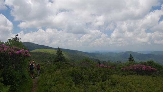 Hikers walk the Appalachian Trail in the Highlands of Roan near the North Carolina-Tennessee border on an outing with the Southern Appalachian Highlands Conservancy to see land conserved by the land trust. The Open Space Institute just announced its Resilient Landscapes Initiative will expand to target $5.5 million for sites such as Roan Mountain in the Southern Blue Ridge that help facilitate wildlife adaptation to climate change.