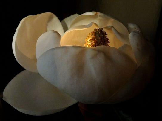 NEW-magnolia-04472.jpg